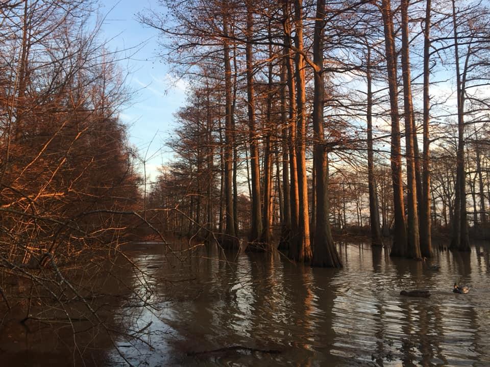 The bayou.