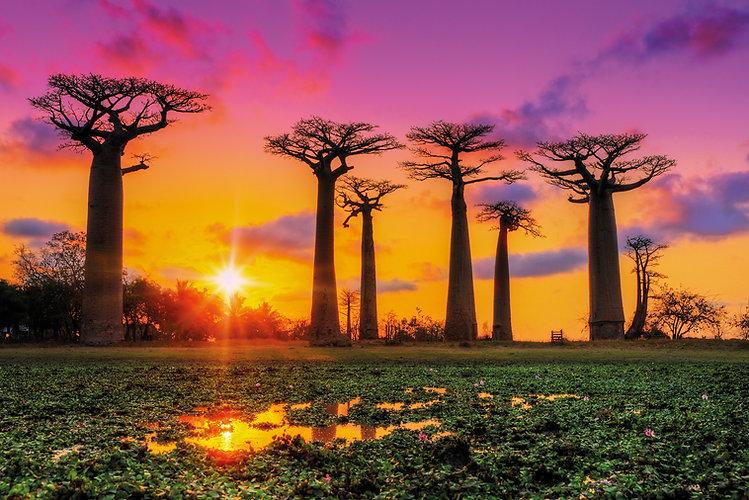 flora-fauna-madagascar-beautiful-baobab-