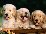 Health for pet em são bernardo, helath for pet em santo andré, plano de saude animal