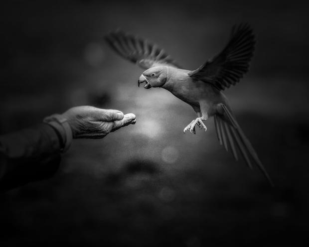 Parakeet Hand