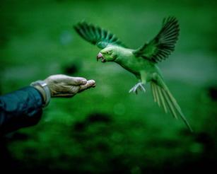 Parakeet Matrix