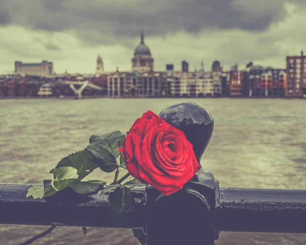 St Pauls Rose