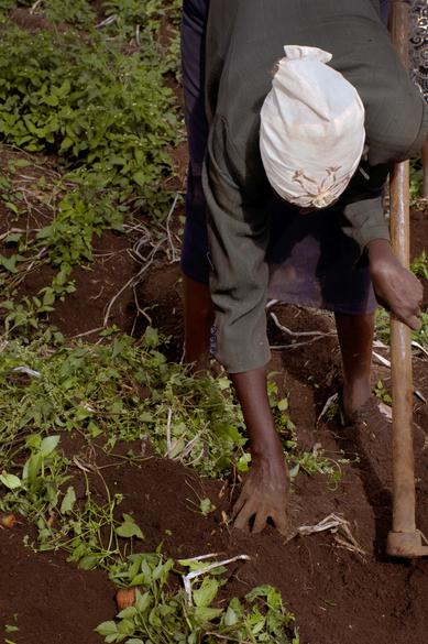Séquence d'un travail (II) Nakuru, Kenya, 2019