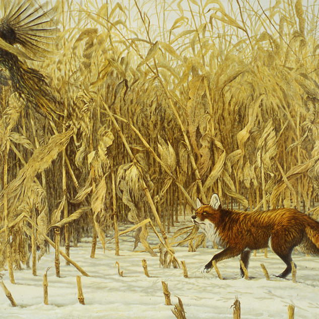 Fox in the Corn
