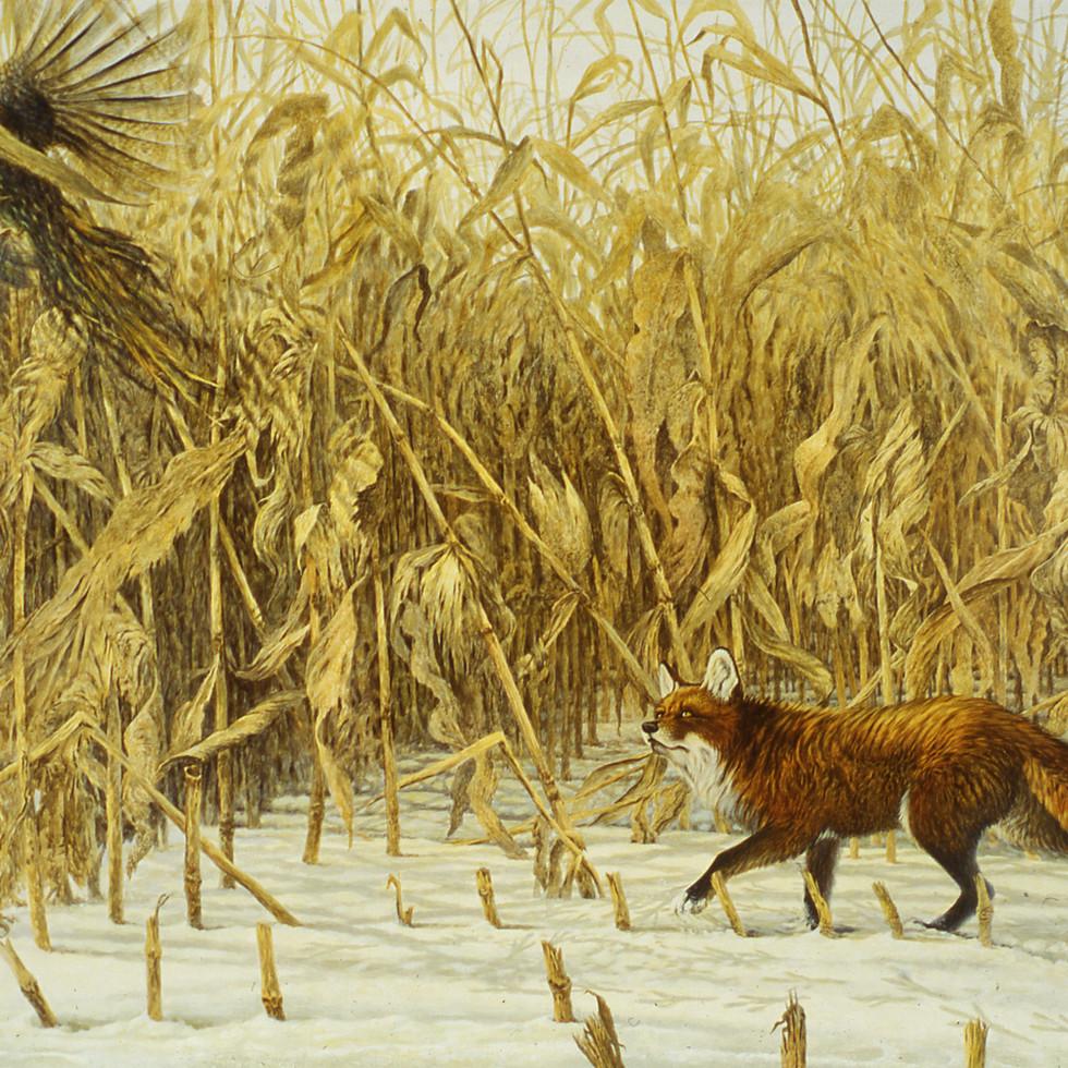 Fox in the Corn