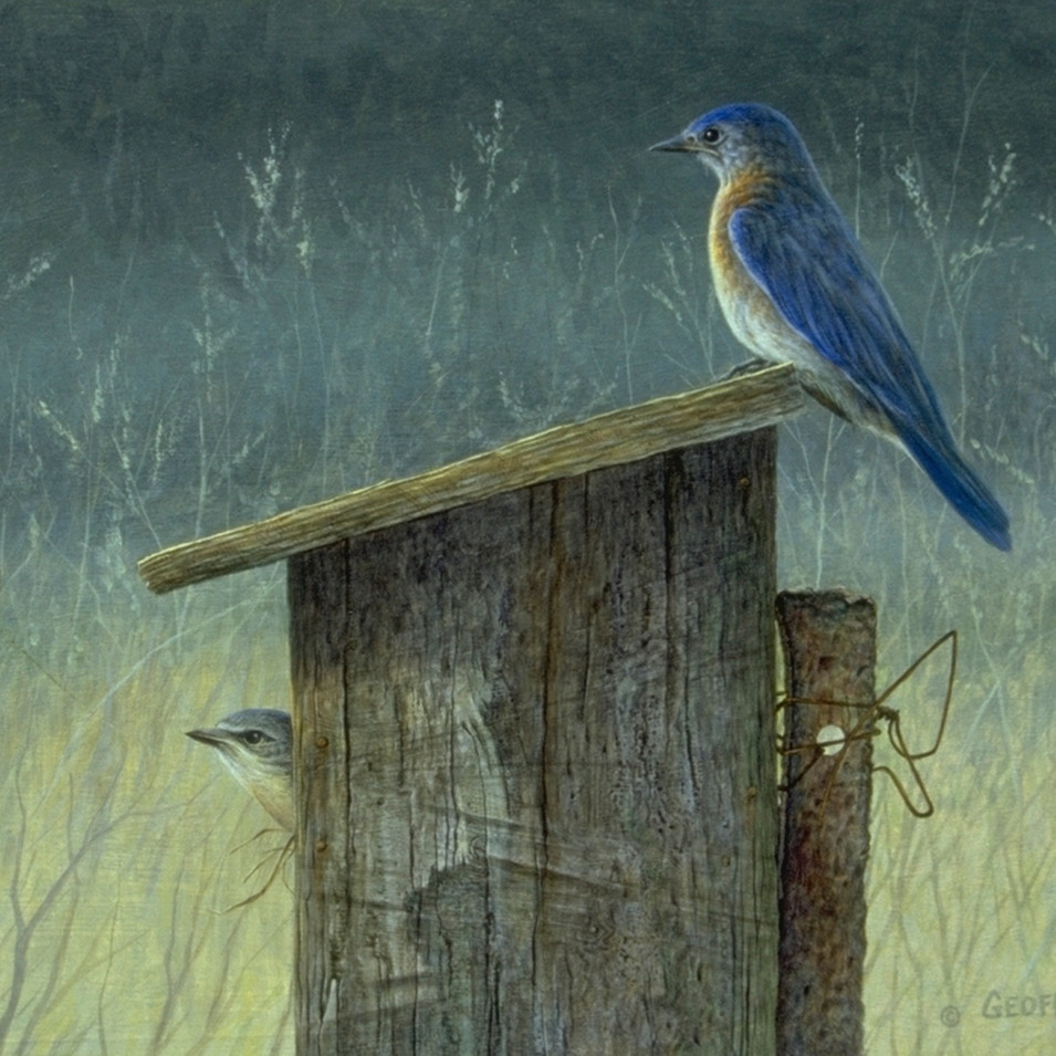 Blue Bird & Nesting Box