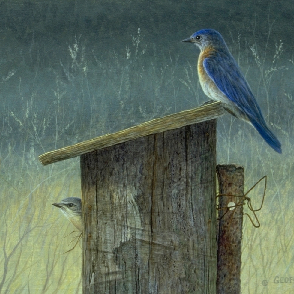 Blue Bird & Nesting Box