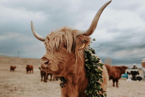 Boho Ranch Wedding: Delayne & Huck