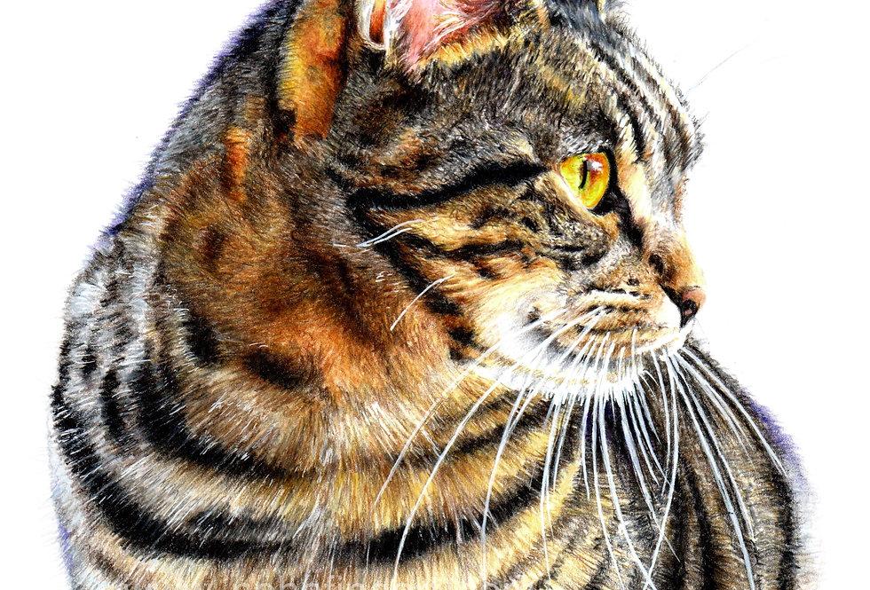 Simba-the cat