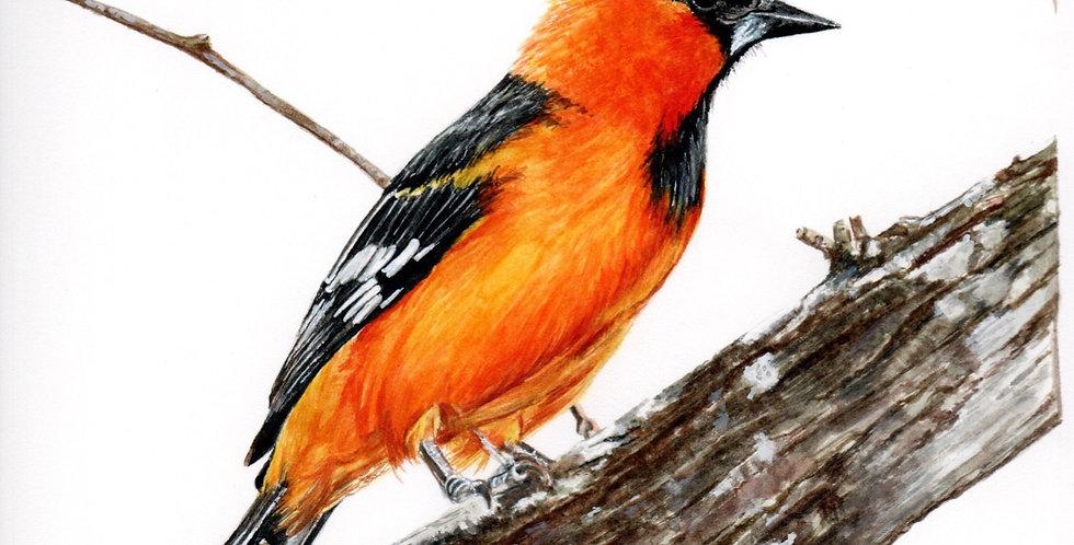 Orange bird on tree