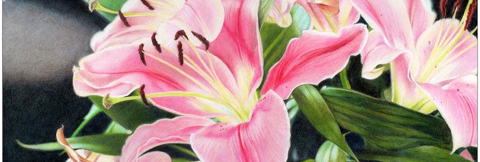 Pink Lilies Bloom