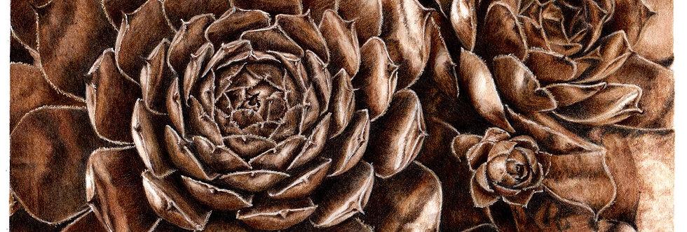 Sepia Succulent
