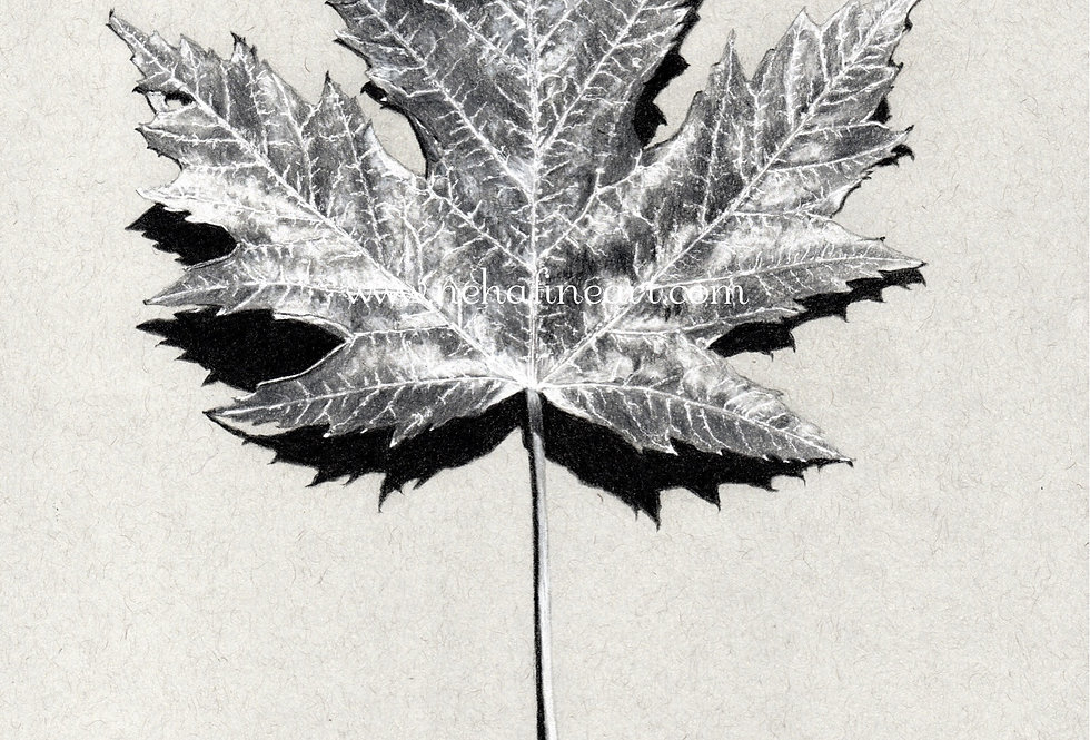 Grey Maple