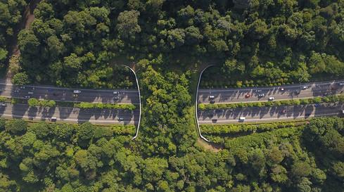 mandai eco-bridge-skyshot drone photogra