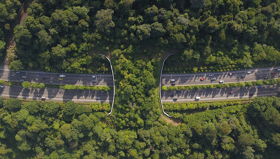 mandai eco-bridge-skyshot drone photogra