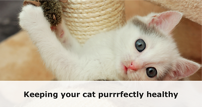 featured_image_purr_1024x1024.png