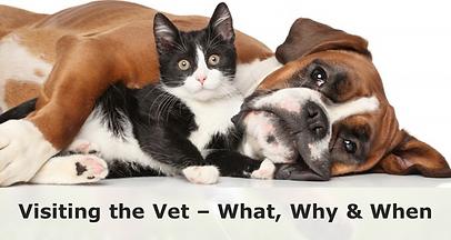 vet_visit_1024x1024.png