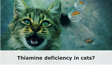 THIAMINE_DEFICIENCY_IN_CATS_1024x1024.pn