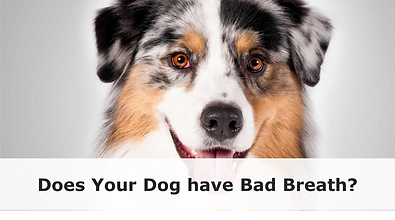 bad_breath_1024x1024.png