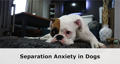 featured_image_separation_anxiety_1024x1