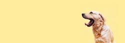 Dog Final Background