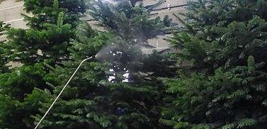 kerstboom-geimpregneerd.jpg