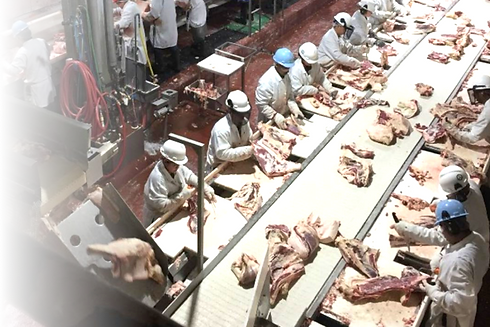 meat processing workers cutting meat in a meat processing plant