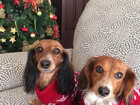 ¿Regalar o no regalar una mascota en navidad?