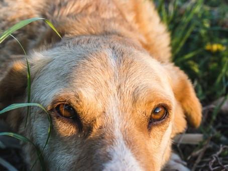 ¡Cuidado! estas plantas son tóxicas para tu perro