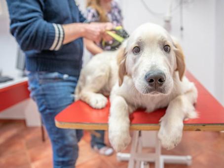 ¿Por qué debo vacunar a mi perro?