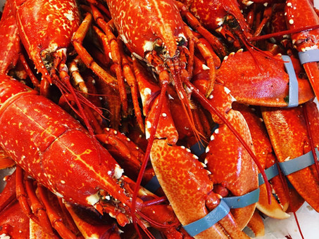 It's a lobster kinda week