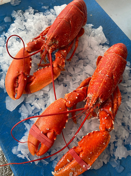 Cooked English Lobster 550g-600g