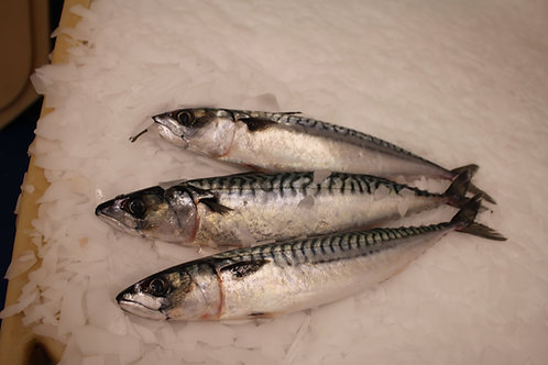 Mackerel 300-400g