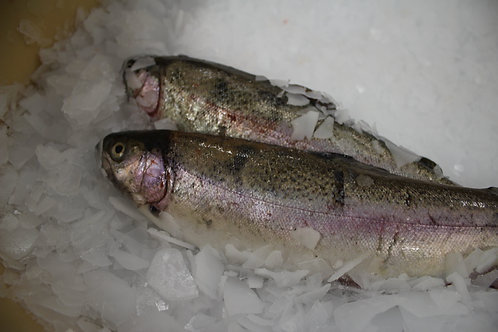 Rainbow Trout 450/500g