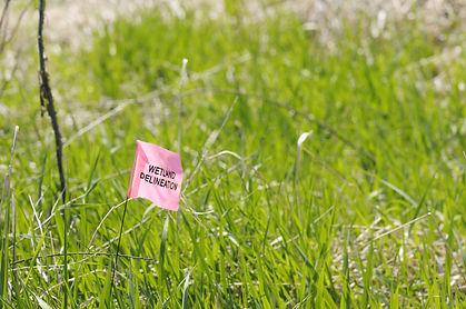 A bright pink nylon flag shows the demar