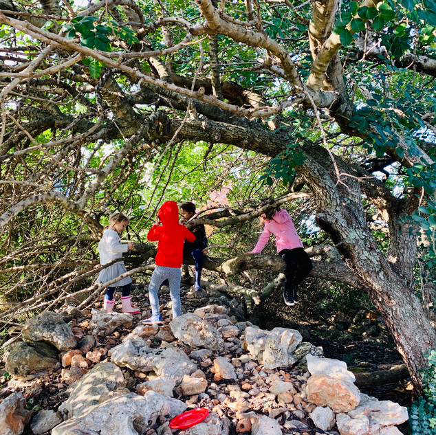 kids having a wild rumpus in a tree