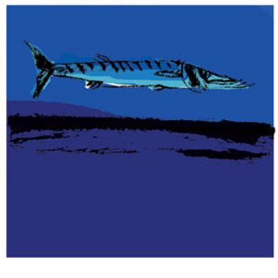 Lámina Barracuda