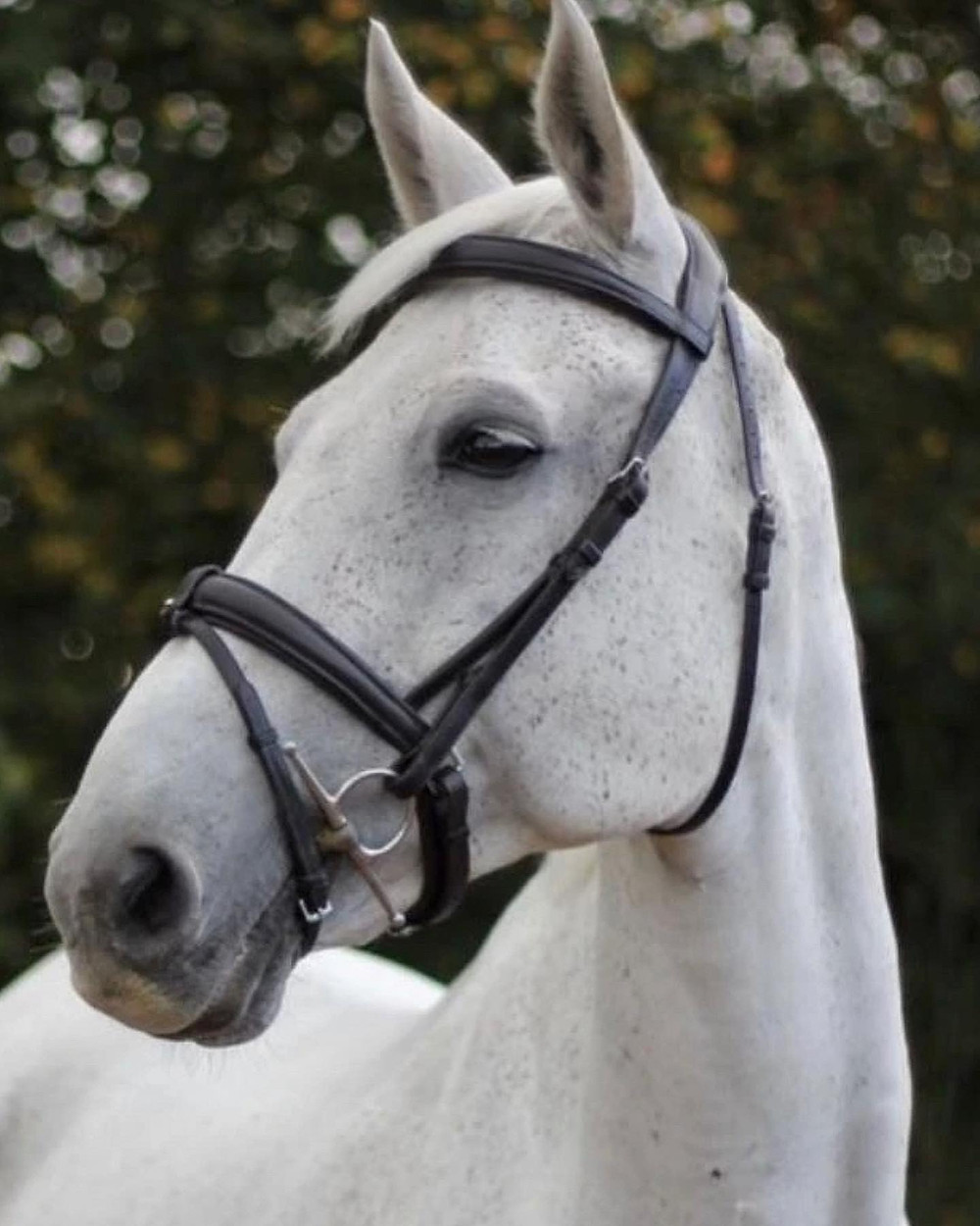equestrian Christmas gift guide - bridle