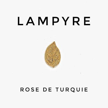 Rose de Turquie
