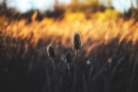 golden-sun-P4DCT4F.jpg