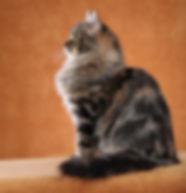 Sveta_profile_edited_edited.jpg