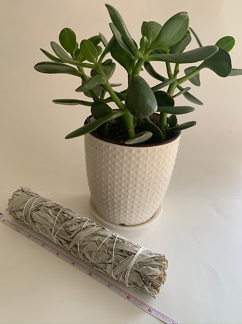 Sacred California Large White  Sage Bundle