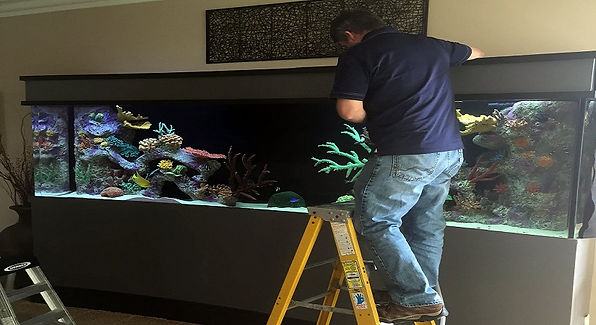 aquarium-cleaning-and-maintenance-servic