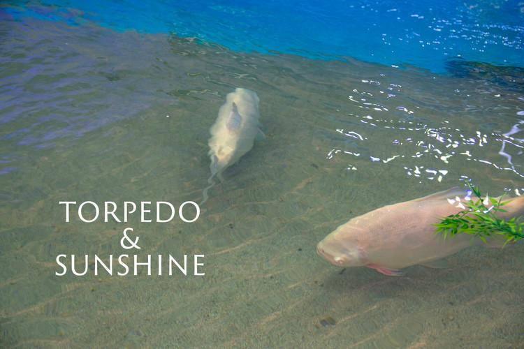 TORPEDO SUNSHINE.jpg