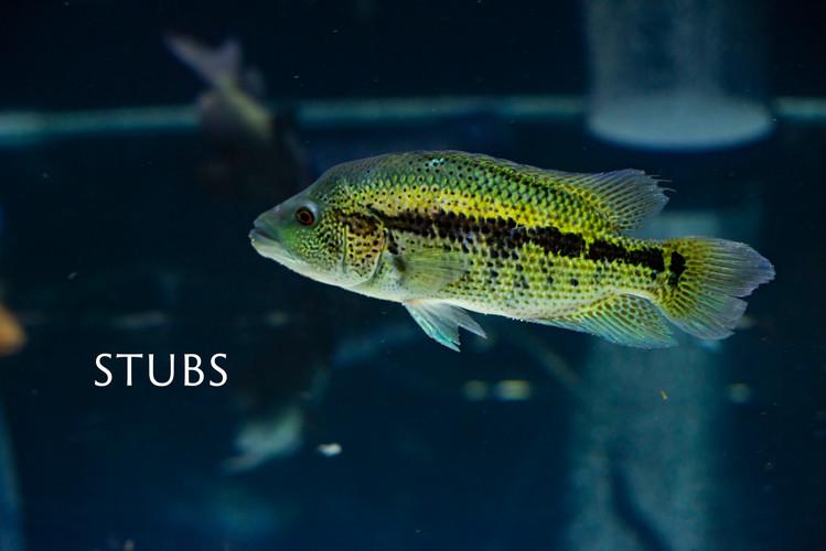 STUBS.jpg