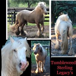 Tumbleweeds Sterling