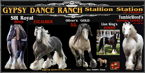 GDR STallion Station.png