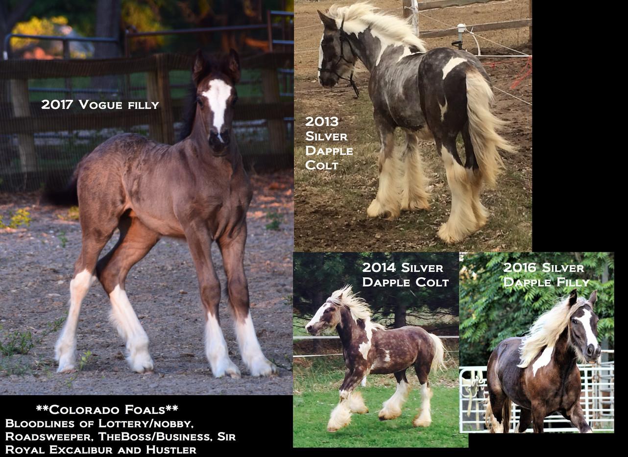 Colorado 4 foals