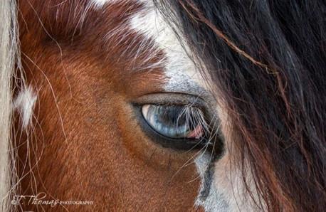 Cindi eye.jpg