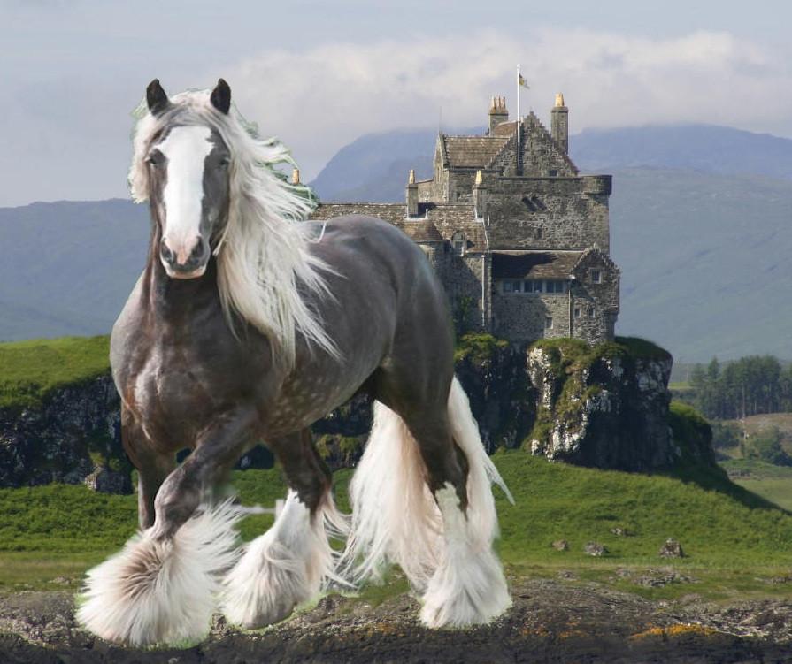 Royal+trot+near+Castle.jpg